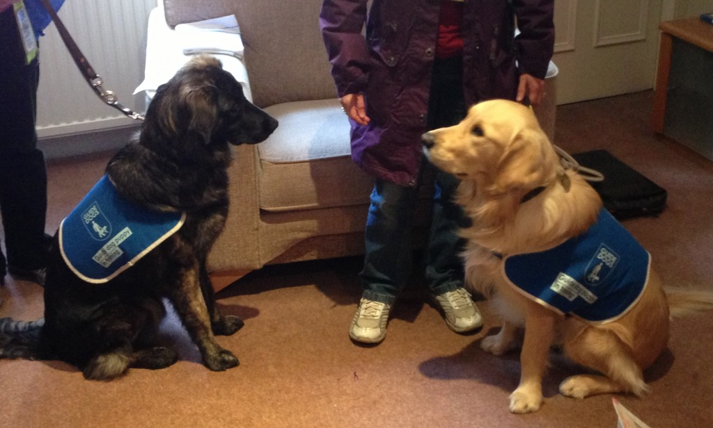 b- guide dogs